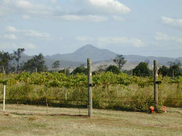 Best wineries near Brisbane Iron Bark Ridge