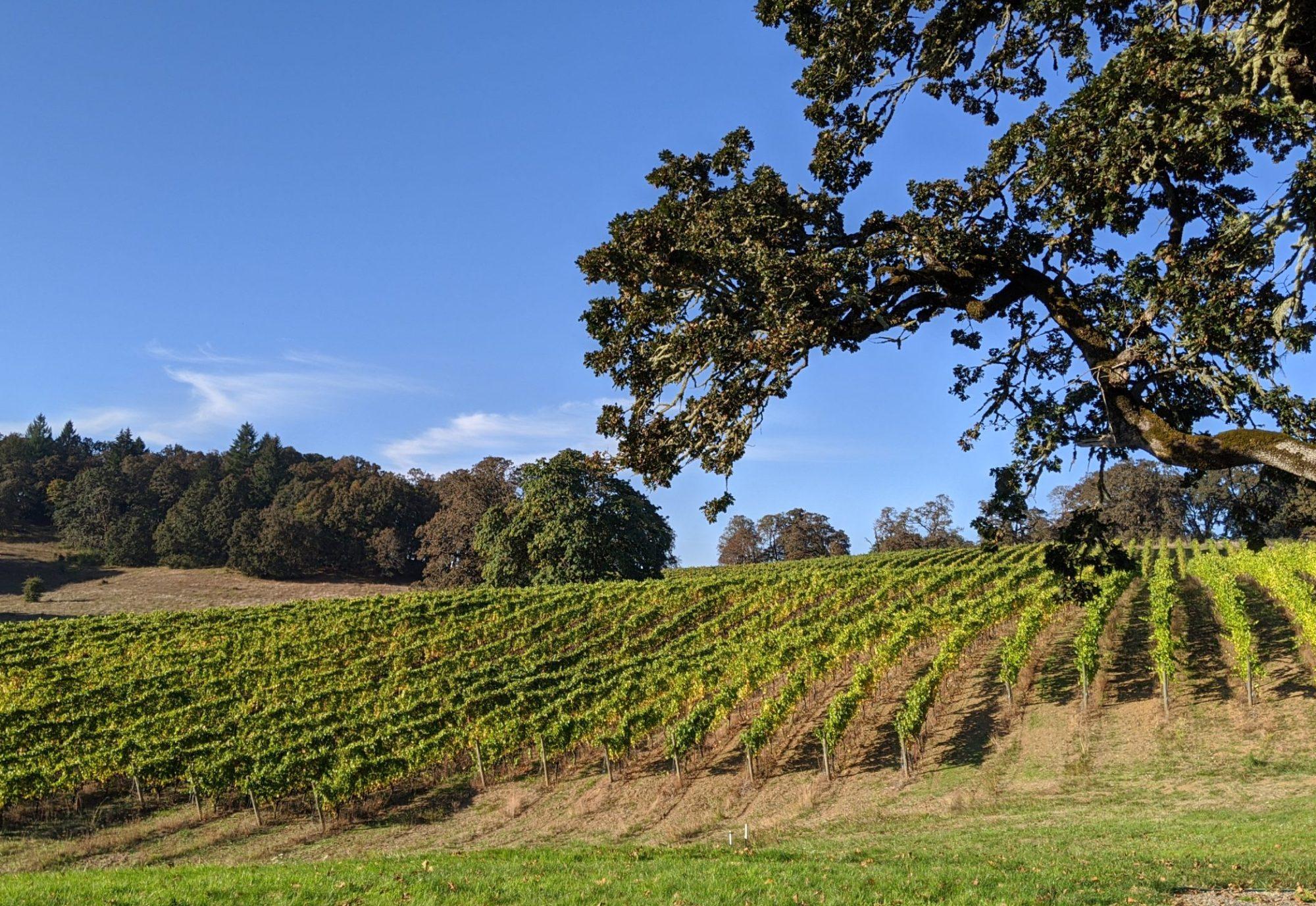 best wineries in Oregon