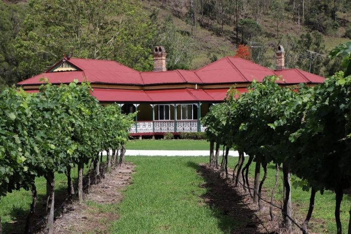 Best wineries near Brisbane O'Reilleys