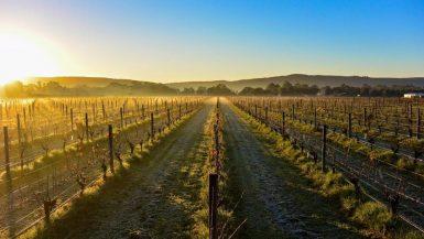 Best wineries near Perth Talijancich