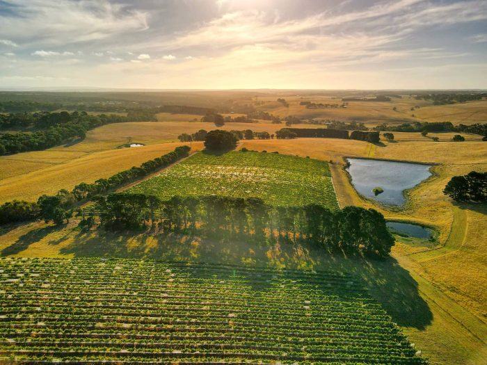 Best wineries near Melbourne Bellbrae