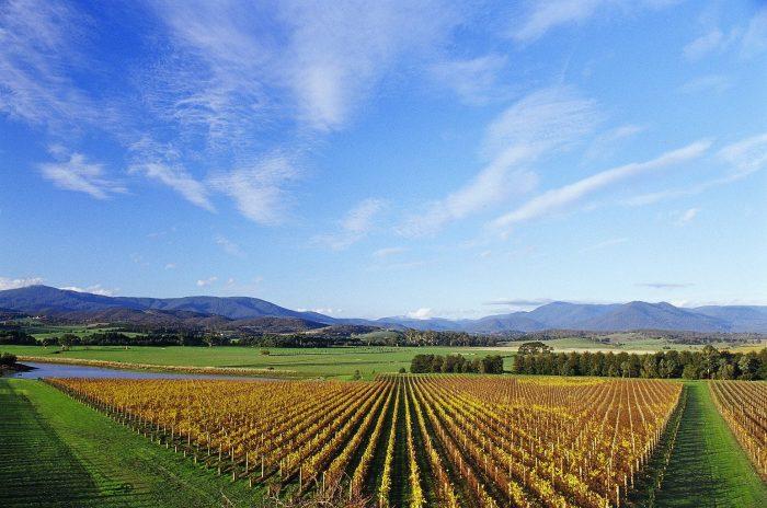 Best wineries near Melbourne Chandon Australia