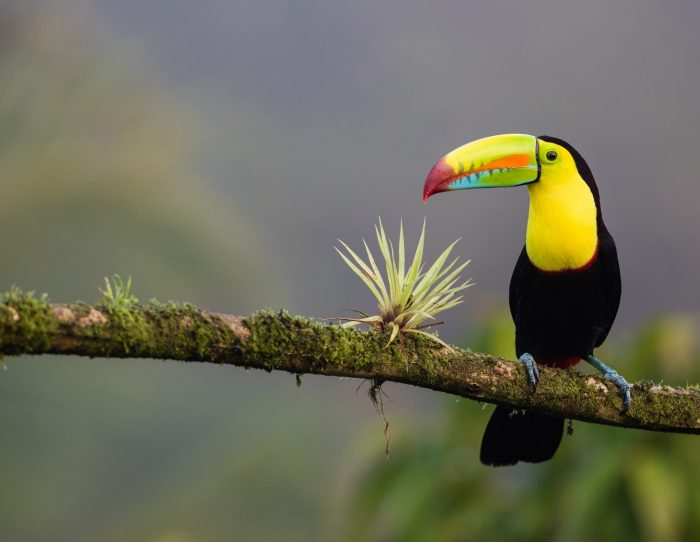 Interesting facts about Costa Rica Biodiversity