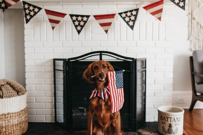 Interesting facts about the United States of America dog ownership