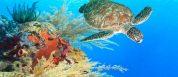 diving sites Indonesia