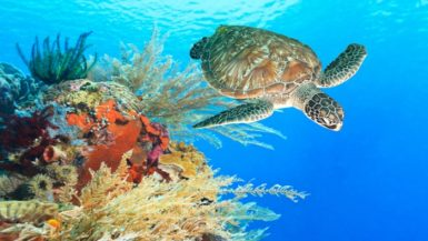 diving sites Indonesia
