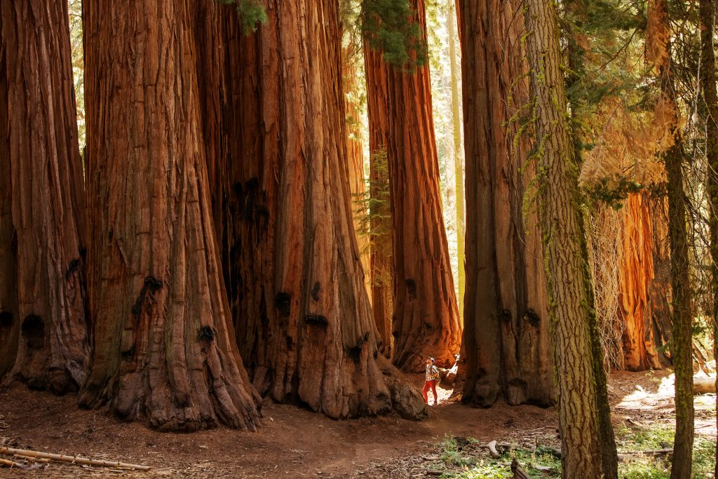 best places hiking california