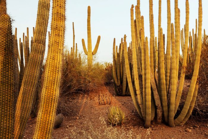 Best things to do in Phoenix with kids desert park