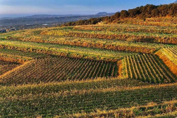 Best wineries Mount Etna