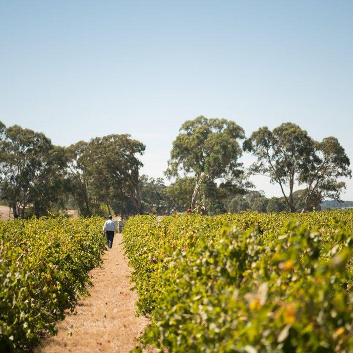 The best wineries in Australia Grant Burge Wines