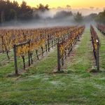 The best wineries in Australia Merricks Creek
