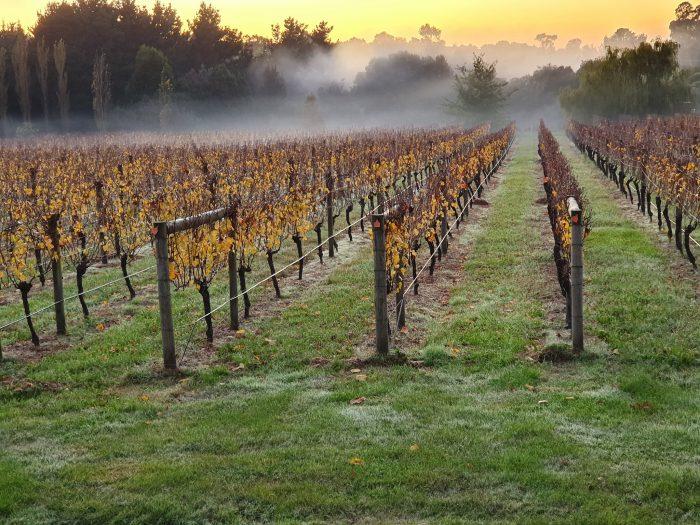 The best wineries in Australia Merricks Creek