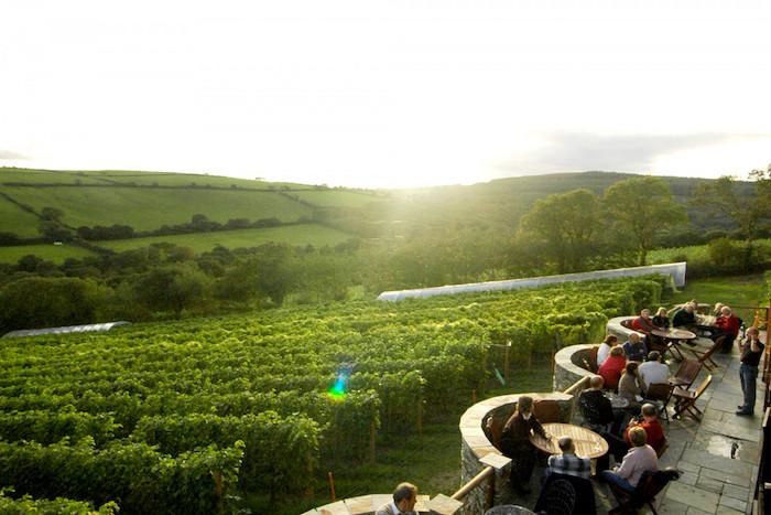 Best vineyards UK