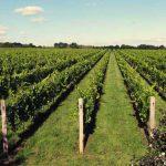 Best vineyards to visit UK