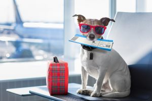 travel with a dog on a plane