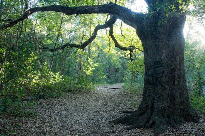 scenic walks in austin